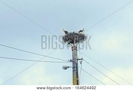 Storks in the nest pole blue sky outdoor.
