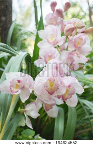 Beautiful pink orchid flower blooming stock photo