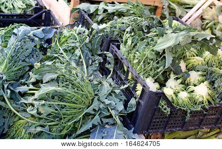 Genuine Original Green Broccoli Called Broccolo Fiolaro  In Ital