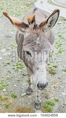 Brown donkey with colored ears outdoor standing portrait.