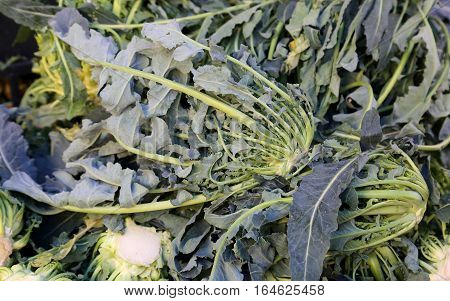 Genuine Original Green Broccoli Northern Italy For Sale At The G