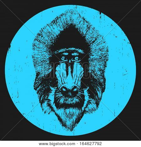 Portrait of  Mandrill. Hand-drawn illustration. T-shirt design. Vector