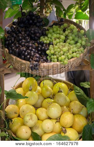 Ripe grapes and passion fruit in the basket stock photo