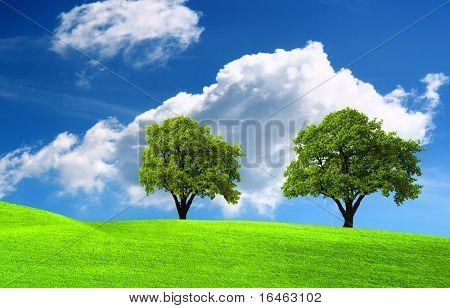 Two green oak tree on green field poster
