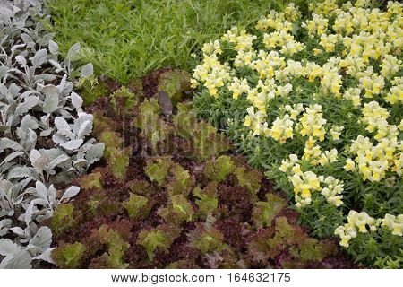 Freshly aroma herbs growing in the garden stock photo