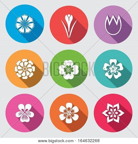 Flower icon set. Camomile, daisy, tulip orchid crocus, saffron cornflower dahlia aster gowan. Floral, herbs symbol. Round colorful flat signs with long shadow. Vector