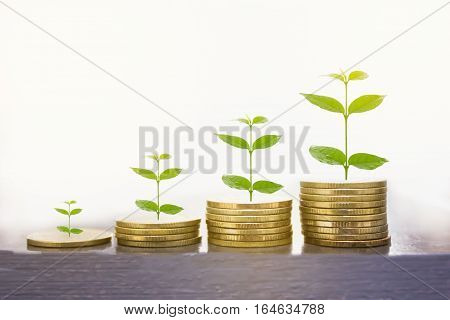 Stacks of golden coins on the white background.