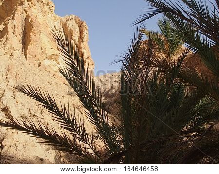 Oasis with date palm trees in Atlassky mountains