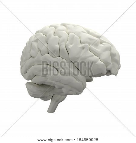 3D Brain model isolated on white background
