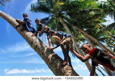 Lavena, Fiji - November 27: Unidentified Kids Climb Palm Tree To Swing On A Rope Swing On November 2