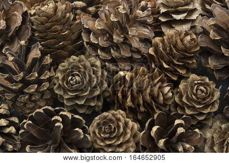 Dried pine cones closeup format filling, nature background
