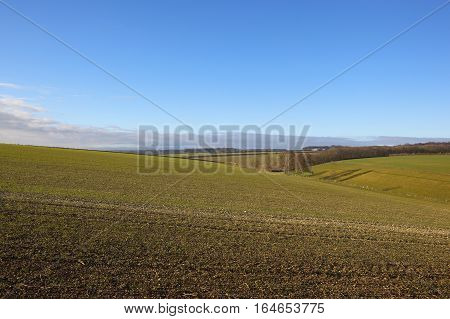 Wheat Field And Valley