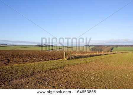 Plow Soil And Wheat Field