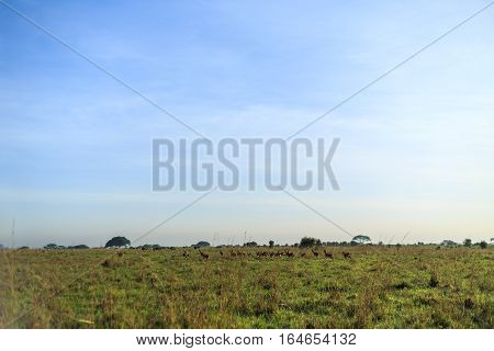 Savannah Landscape With A Herd Of Antelope