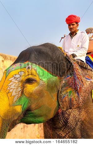 Amber, India - November 13: Portrait Of Decorated Elephant In Amber Fort On November 13, 2014 In Amb