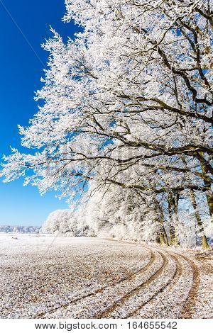 Path On Snowy Field Under Frozen Branches