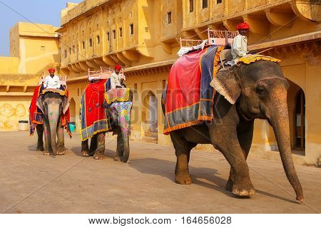 Amber, India - November 13: Unidentified Men Ride Decorated Elephants In Jaleb Chowk In Amber Fort O