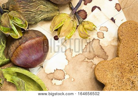 A background with a fresh raw chestnut, a cookie and dried plants and place for your text.