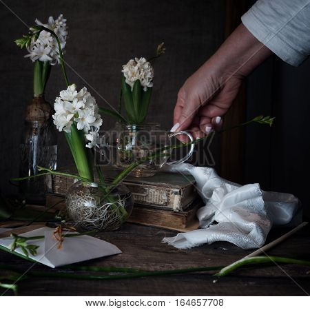 three white hyacinth and freesia in transparent vases, a female hand on a dark background.
