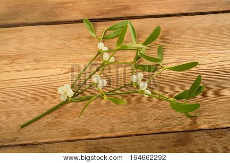 Mistletoe Branch With Berries