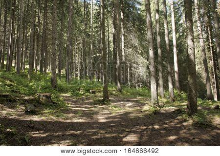 forest in Val di Fassa - Trentino - Italy