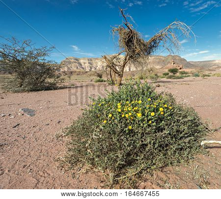 View on the valley of geological Timna park and dry riverbed. It is located 25 km north of Eilat (Israel), combines beautiful scenery