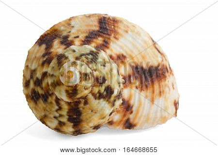 colorful sea shells isolated on white background
