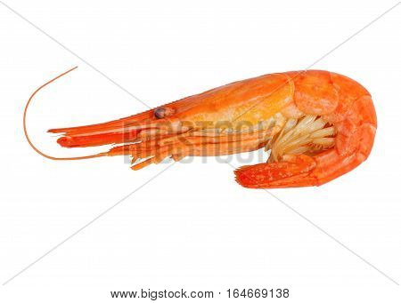 Boiled shrimp isolated on white. Cooked shrimps. Seafood
