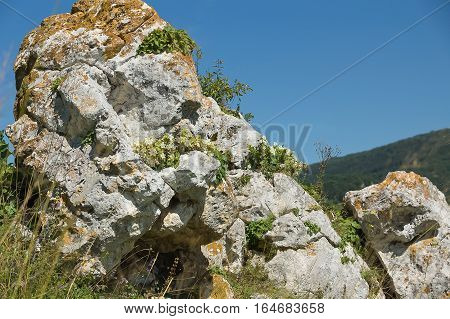 Campanula on the rock. The farm kizinka, Krasnodar Krai, Russia