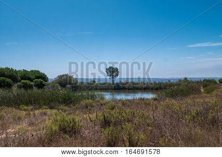 Portugal - Trees And Meadow