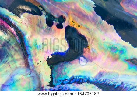 Close up colorful background of abalone shell haliotis