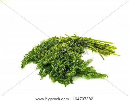 Leaf of baby carrot on isolated white background