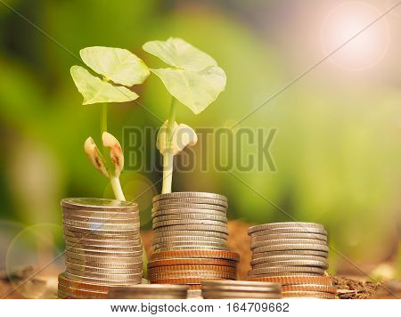Plant growing with stack of coins in nature. Savings investment and interest Concept.