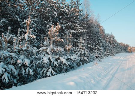 Snow covered pines in winter ural forest - empty road at sunset, wide angle