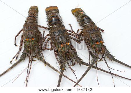 Three Lobsters