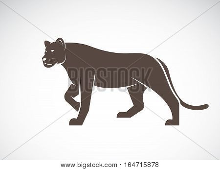 Vector of a lion female on white background Wild Animals.