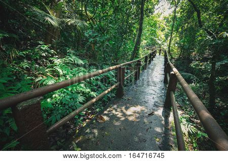 Long walking path wet by rain inside green tropical forest of Thailand's national park