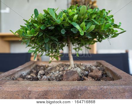Mini tree in pot on the table