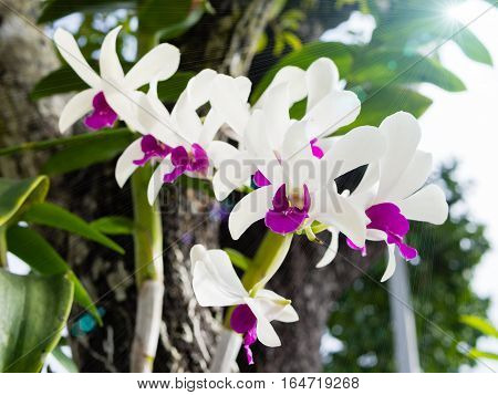 Purple and white orchids with a blurry background and Lens Flare or sunspot in the park