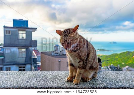 Stray cat sittin on a wall in Jiufen village Taiwan