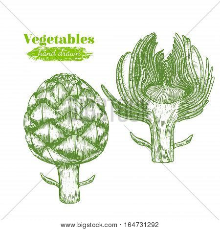 Artichoke Hand Draw Sketch Fresh Organic Food for Menu Vintage Retro Style. Vector illustration
