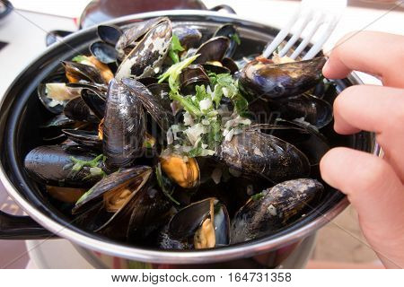 A Sea Mussel With A Tight Hand
