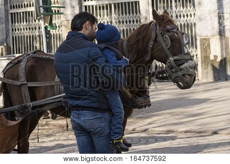 Tehran IRAN - January 6 2017 Little Boy Watching Traditional Old-fashioned Fiacre Horse From Close Viewpoint Beside of His Father at Tehran Street.