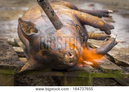 Traditional pig sacrifice custom in Romani. One of the most important winter customs in Romanian villages is the pig slaughtering usually held on or after December 20 the day of Saint Ignat