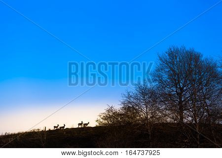 Group of deer at forest edge seen from far away as silhouette in front of bright horizon and blue twilight sky (copy space)