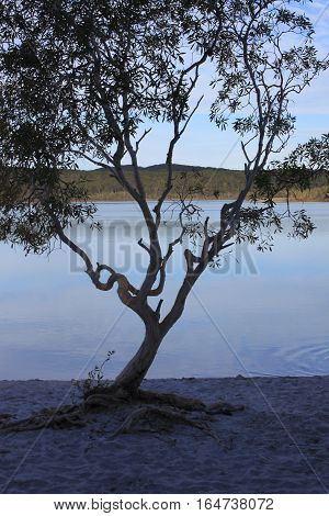 Pretty views of Lake Makenzie at Fraser Island in Australia Queensland