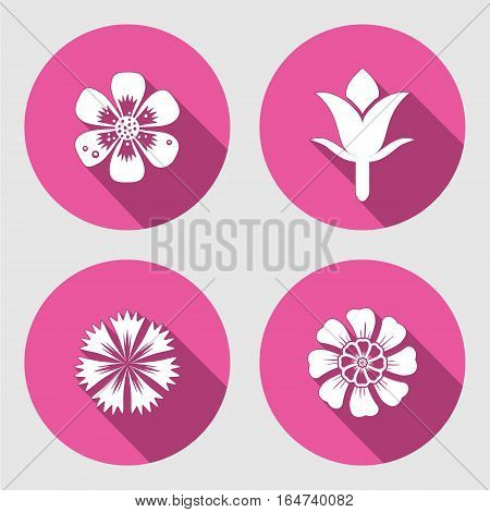 Flower icons set. Chamomile, daisy, blue poppy, Cloves. Spring flowers. Floral symbols with leaves. Colored signs. May be used in cuisine. Vector isolated.