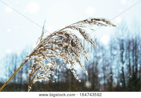 meadow grass winter plant swamp naturewoodland sunbeam