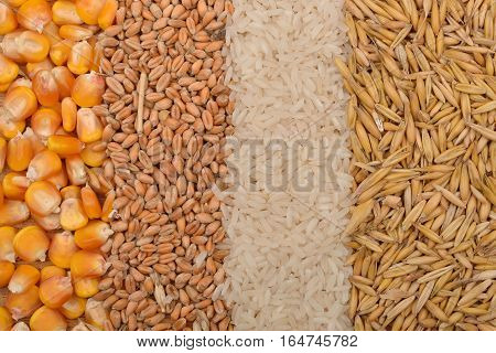 Lines Of Beans Of Dried Corn, Oats, Rice And Wheat Lying On Jute Canvas Background. Rustic Image. Co