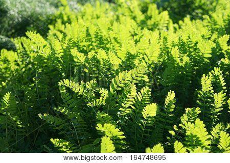 Natural grass in sunlight natural green background. Selective focus natural optical blur shallow dof